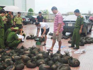 Vi phạm quy định bảo vệ động vật quý hiếm bị phạt bao nhiêu năm tù?