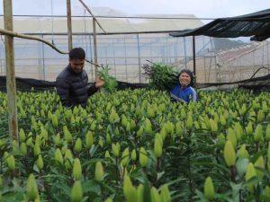 Nguyên tắc nộp đơn đầu tiên đối với giống cây trồng