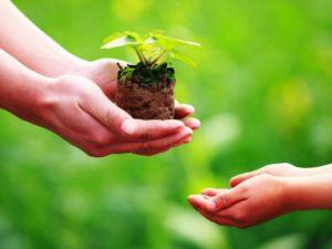 Thẩm quyền và thủ tục chuyển giao quyền sử dụng giống cây trồng